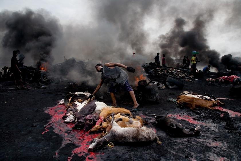 کشتارگاه حیوانات در نیجریه